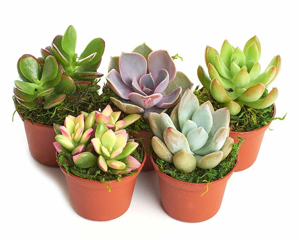 set of succulents