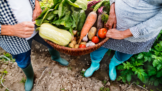 picking vegetables from the garden
