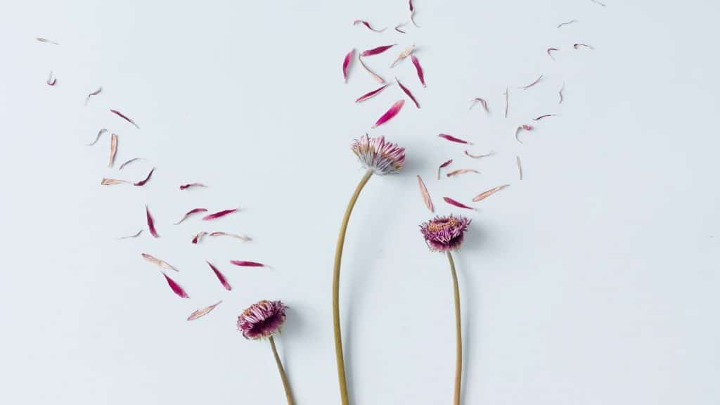 deconstructed flowers to represent body image